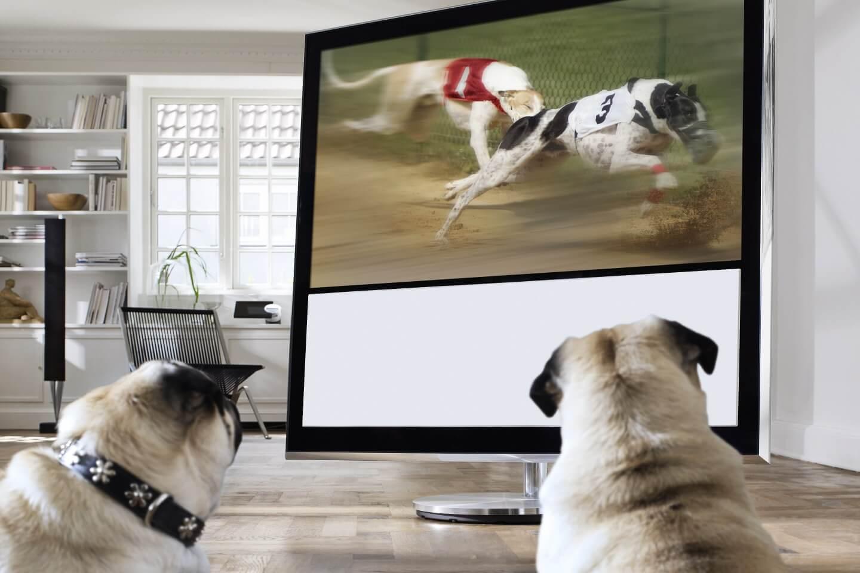 das perfekte Fernseherlebnis